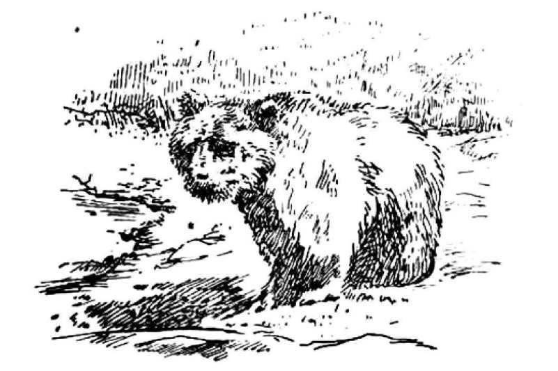 junak_10.rocnik_(1923-24)_cislo_10_medved
