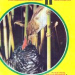 PIONYRSKA_STEZKA_7.rocnik_(1976-77)_cislo_11.pdf